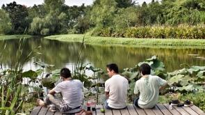 xixi wetlands