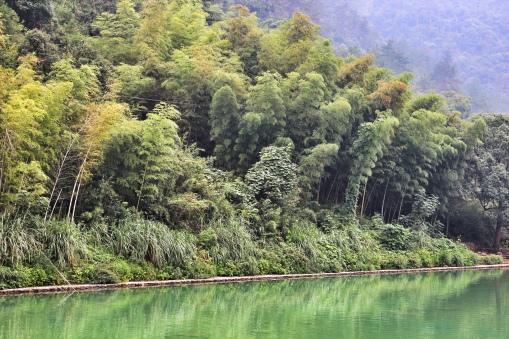 Bamboo fields outside of Tonglu