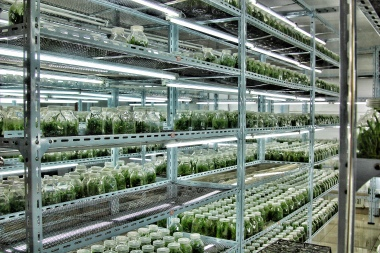 Shi Hu organic farm